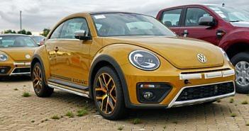 beetle-dune (1)